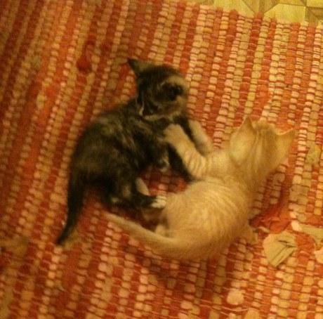 cattens