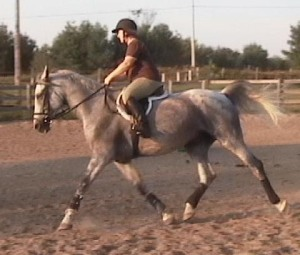 gray horse with rider